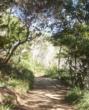 noosa-national-park-coastal-track