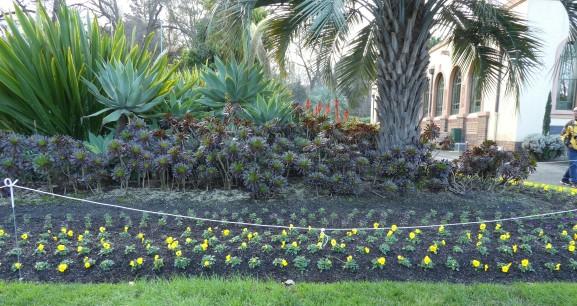 Seedlings waiting for Spring