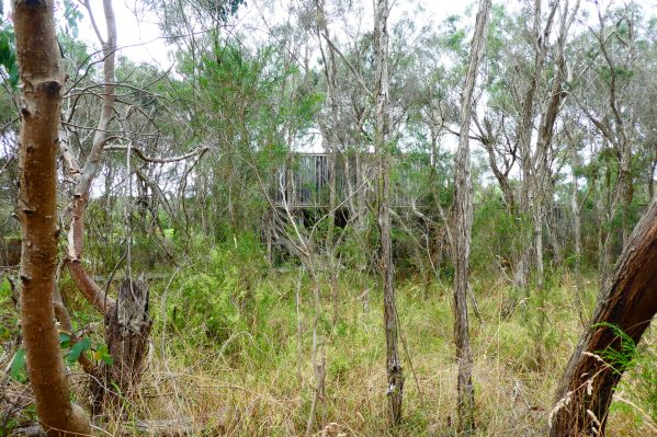 Minsmere Hide, hiding in the bush